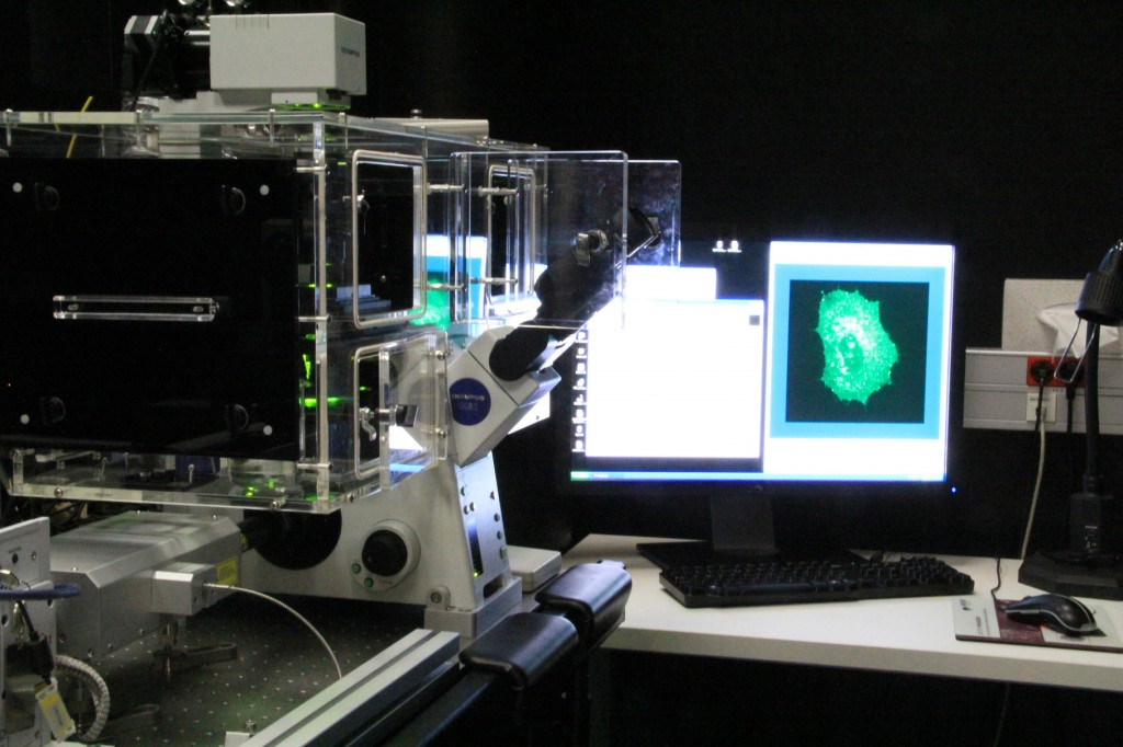 Figure 2: Live-cell imaging using a Spinning disk microscope.